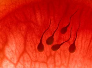 Centro inseminación artificial Barcelona